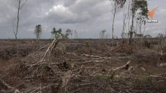 กรมอุทยานฯเปิด 3 มาตรการเอาผิดรุกป่าพรุ ให้ที่ดินเพิกถอน-ดีเอสไอดำเนินคดี-ฟ้องแพ่ง