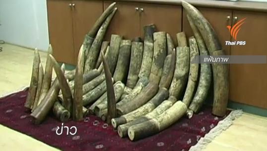 ไทยเตรียมทำลายงาช้างแอฟริการวมกว่า 2 ตัน 26 ส.ค.นี้