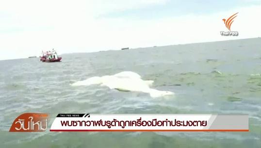 นักวิชาการประมงคาดเครื่องมือทำประมง-ขยะ สาเหตุวาฬบลูด้ายาว 12 เมตรตายที่เกาะสีชัง