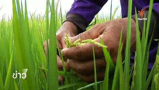 ก.เกษตรฯวางนโยบายช่วยเหลือชาวนา จ.ชัยนาท