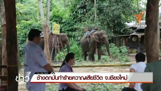 ช้างตกมันทำร้ายควาญช้างเสียชีวิต 1 คน ใน จ.เชียงใหม่