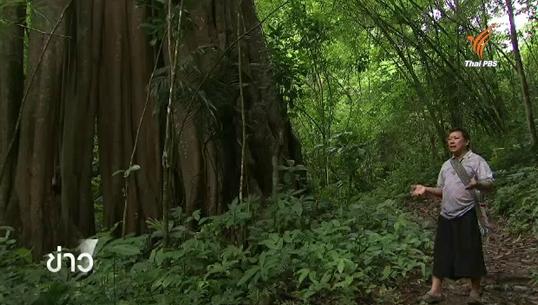 ชุมชนบ้านห้วยปลาหลด จ.ตาก ต้นแบบการฟื้นฟูป่าต้นน้ำอย่างยั่งยืน