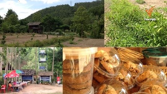 'บ้านทาป่าเปา'ต้นแบบฟื้นฟูป่าอนุรักษ์ต้นน้ำ ต่อยอดเกษตรกรรม-แปรรูปผลิตภัณฑ์