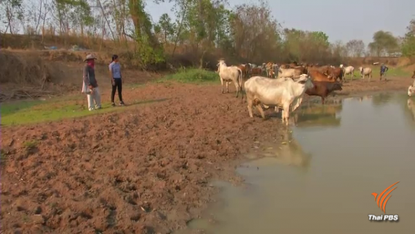 How drought weakens Thai economy