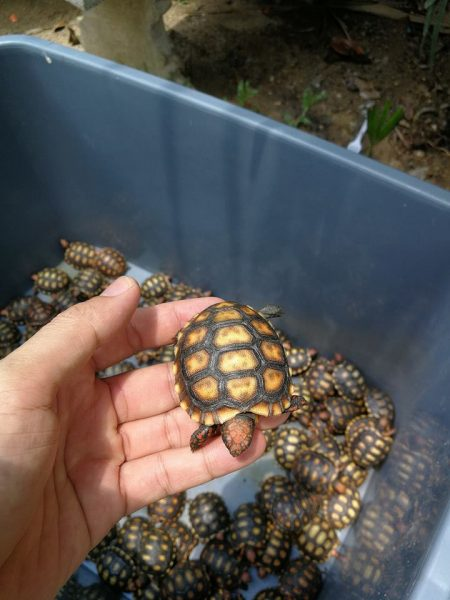 Over 4,500 endangered baby turtles seized from passenger van in Tak province