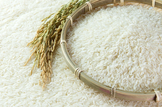 Prolonged protests may affect exports of Thai Hom Mali rice