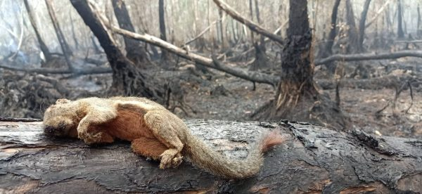 Hua Pa Khiew Swamp Forest Fire Thai Pbs World
