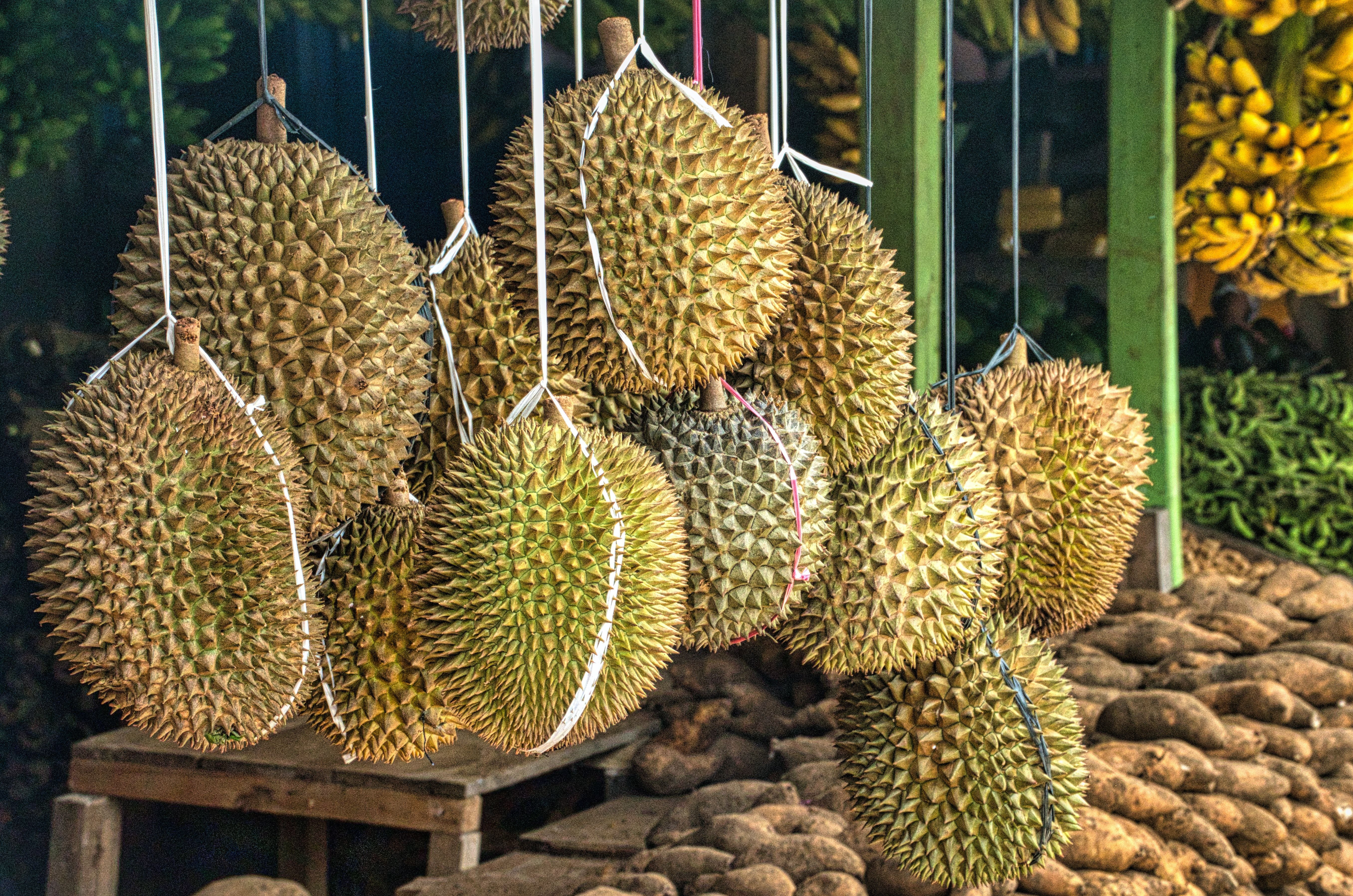 green and brown round fruits 3888735 - Thai durians trigger evacuation of post office in German town