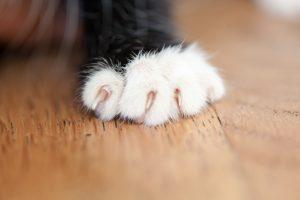 寵物剪趾甲
