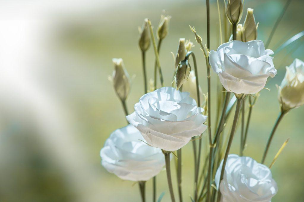 情人節, 情人節送花, 送花, 花語, 桔梗, 桔梗花