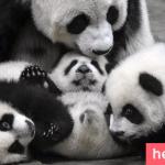 Even Panda needs Family Photgaphy