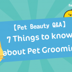 【 Pet Beauty Q & A】 7 Things to know about Pet Grooming