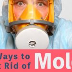 5 Ways to Get Rid of Mold