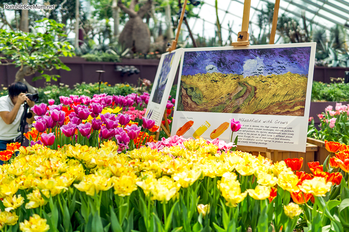 a mini art exhibition where pictures of some of van goghs famous works were displayed surrounded by tulips that were specially chosen to complement