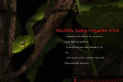 Basics of Shooting the Natural World (wildlife)