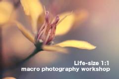 Life-size 1:1 macro photography workshop