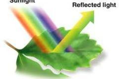 PHOTOSYNTHESIS: SCIENCE ABOUT THE FOOD