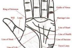 LEARN PALMISTRY IN 7 DAYS WORKSHOP