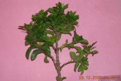 The Art of Miniaturing Trees