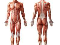 SCIENCE OF MUSCLE GROWTH