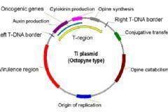 Devour Biotechnology