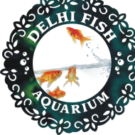 Delhi Fish Aquarium photo
