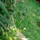 Sachin S photo