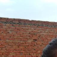 Isha S. Engineering Diploma Tuition trainer in Bangalore