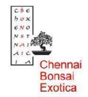 Chennai Bonsai Exotica photo