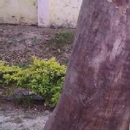 Mayukh photo