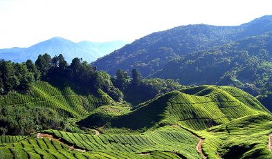 cameron highlands hiking guide