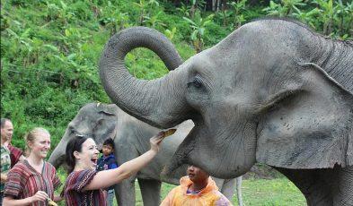 thailand elephant sanctuaries