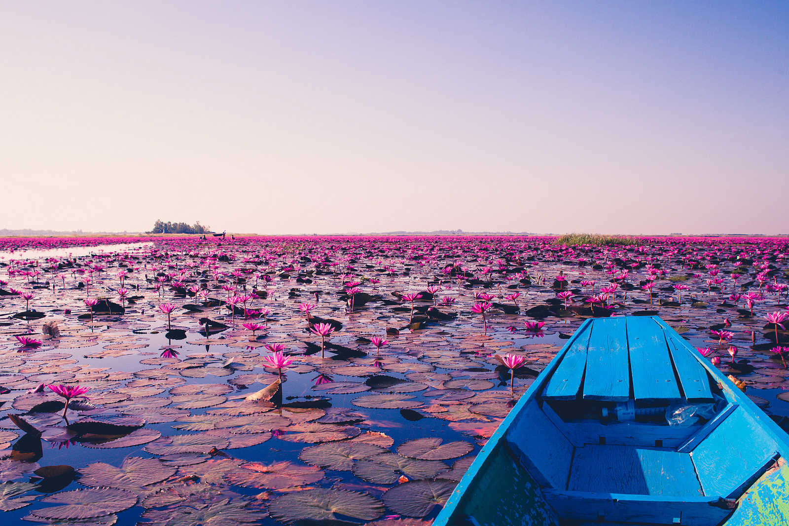 Image result for RED LOTUS SEA thailand