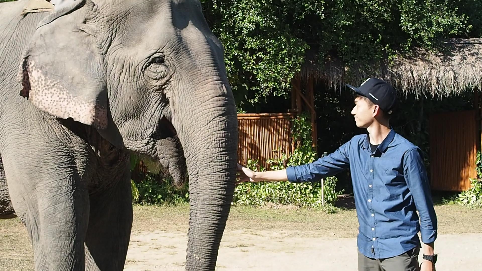 8 Awesome Reasons to Pick Kaziranga for Your Next Wildlife Expedition!