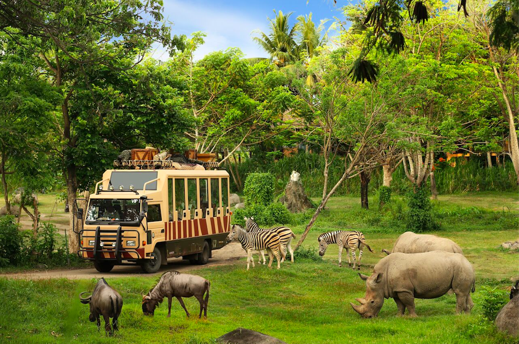8 Reasons Why Bali Safari & Marine Park Should Be In Your Bali Itinerary