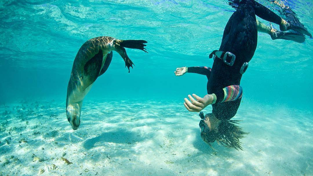 Sea lion at Ningaloo Reef