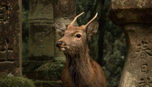 wildlife tourism ethical
