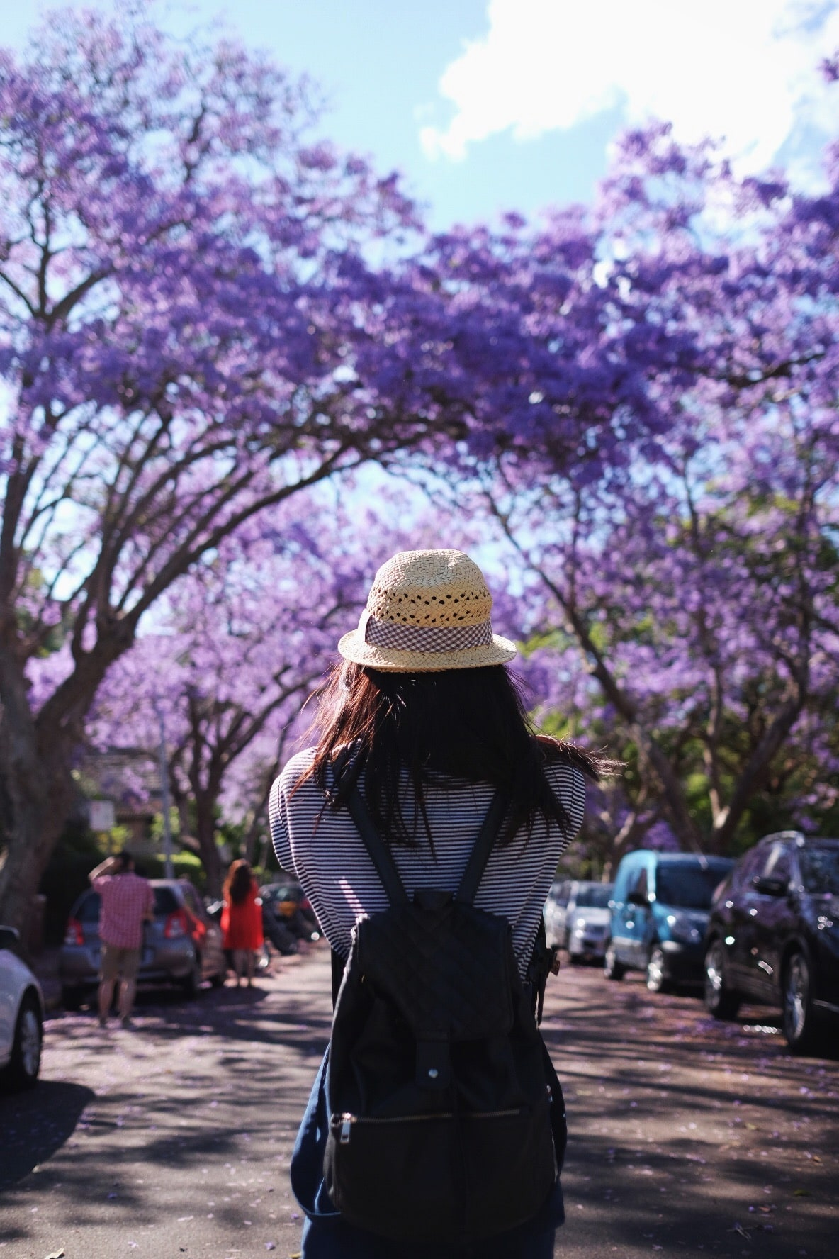 Jacarandas at McDougall St in Kirribilli, Sydney