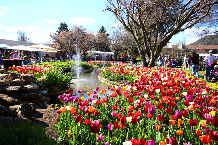 Tulip Time Festival in Bowral, Southern Highlands New South Wales