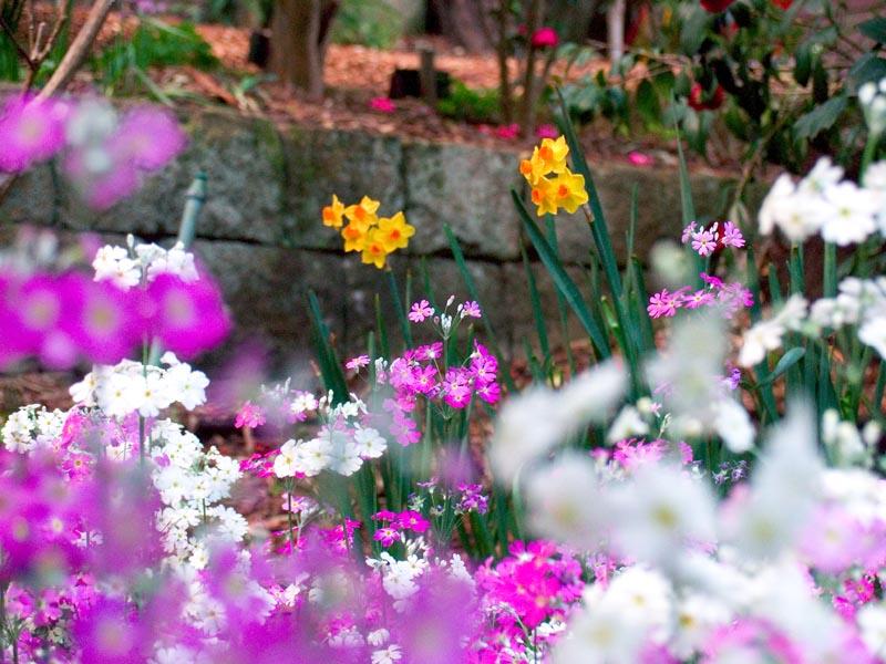 Spring florals at Lisgar Gardens in Sydney
