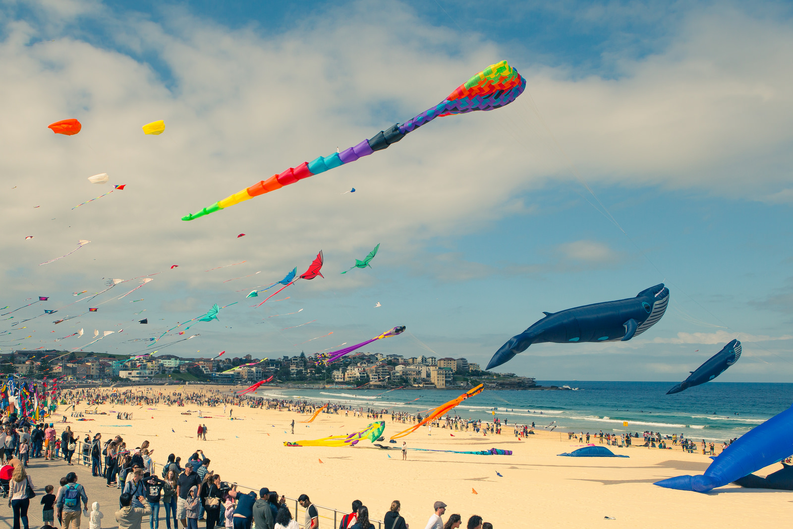 Festival of the Winds at Bondi, Sydney