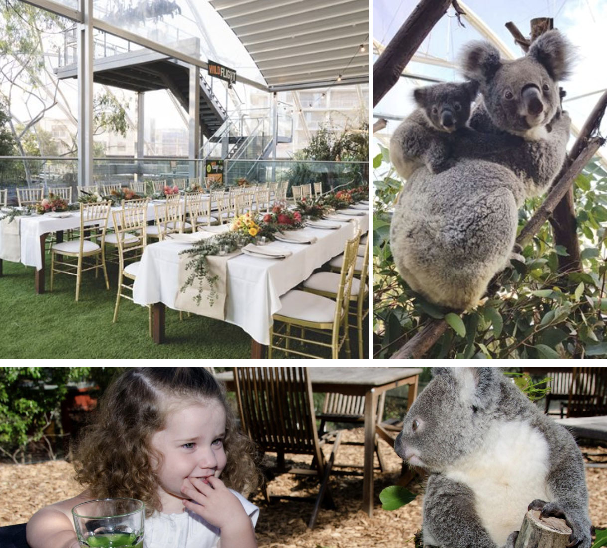WILD LIFE Sydney Zoo Breakfast with Koalas
