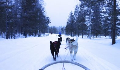 husky sledding in arctic circle