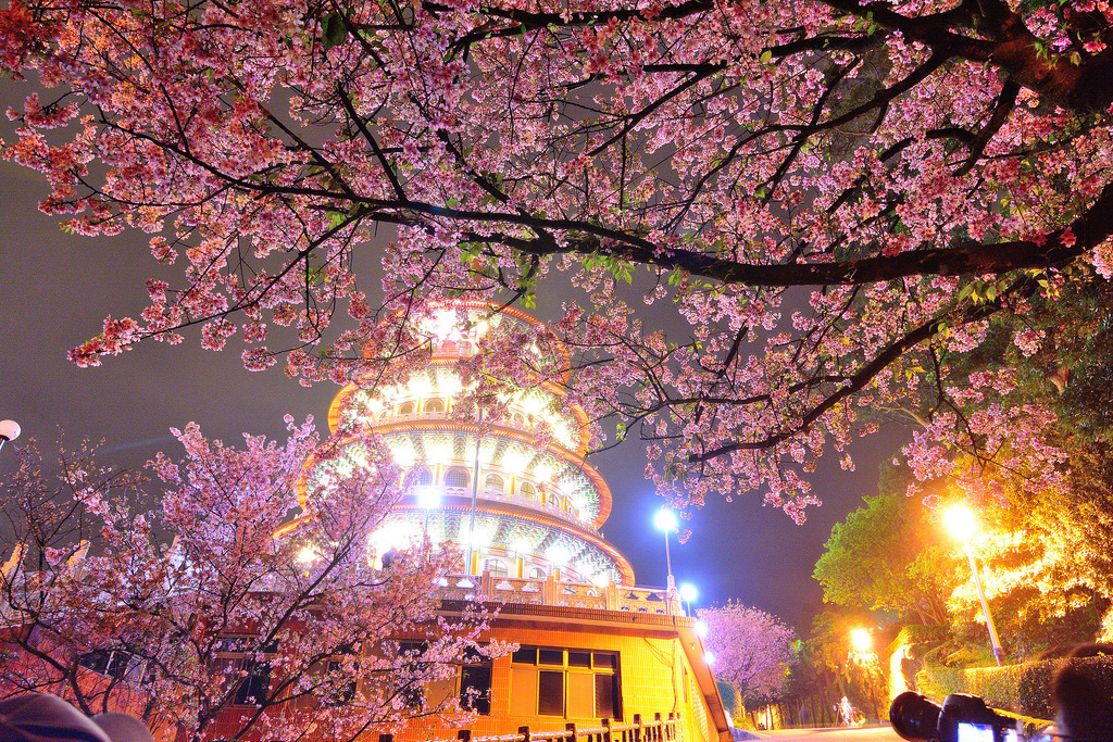 Where to See Cherry Blossoms in Taiwan