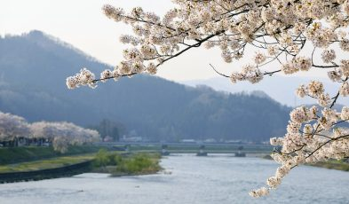 sakura viewing spots in tohoku