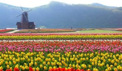 Spring Flowers in Japan