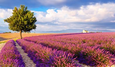 Here Are the Best Spots to Enjoy the Lavender Fields of Provence!
