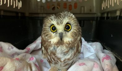 owl found in Rockefeller