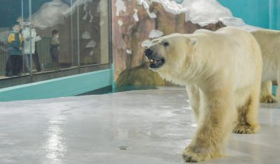 The China Polar Bear Hotel Everyone's Talking About