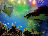 10% Off Admission Ticket to Aquaria KLCC with Maybank